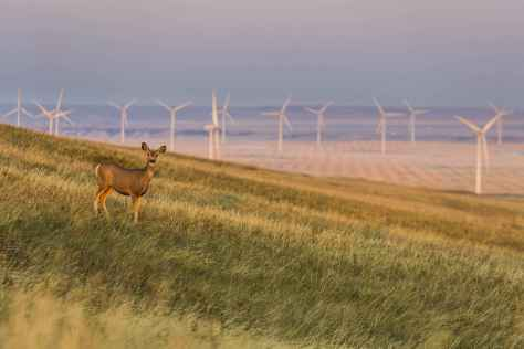 An ensemble of wind turbines generate electricity in harmony with nature in Alberta, Canada. Keith Arkins