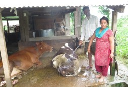 Sarita Regmi and her husband wash their cows using water from a solar pump.
